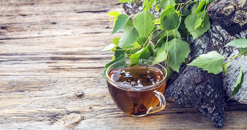 Learn How to Make Chaga Tea